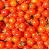 Big Tomato Growers/UFW To Sign Contracts