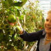 Discovery May Lead To Tomatoes With Vintage Taste