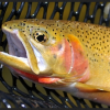 UC: Climate Change Threatens Native Fish