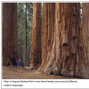 Hollywood to *Camp Out* in Sequoia National Park/ Casting Call for Movie Extras