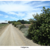 Hedgerows Enhance Bird Abundance & Diversity On Farms
