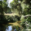 State Grant Will Expand Kaweah Oaks Preserve