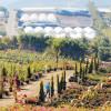 Nurseries Report Resurgence Of Plant Sales