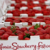 Cal Poly & California Strawberry Commission Announce Partnership
