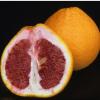 New Citrus Variety