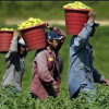 Local Farm & Community Group Oppose Mass Deportation/ Plant Tea?/More