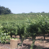 PASO ROBLES WINE COUNTRY NAMED WINE REGION OF THE YEAR BY WINE ENTHUSIAST MAGAZINE