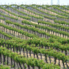 California Wine Exports Reach All-Time High in 2013