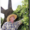 As Citrus Trees Bloom, 'Dismal' Water Year Looms