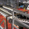 What Drought?  State Tomato Production To Climb 17.6%