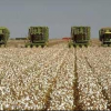 Ag Beat: Drought Cuts Field Crop Acreage / More