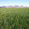 California proposes first crop-based program for state's carbon market