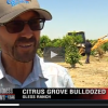 Central Valley Citrus Farmers Avoid Dire Predictions …So Far