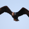 Around SLO: Bald Eagle Returns / Biggest Solar Plant Completed / Wine & Olive Ranch To Expand
