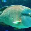 Changing Climate May Move Fish Populations North