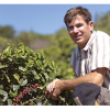 Growing Coffee On Central Coast
