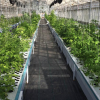 Santa Barbara Aquaponics Farm Goes Organic