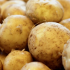 Salt-Tolerant Dutch Potatoes Offer Hope