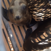 Rehabilitated Marine Mammals Returned To Sea After Pipeline Spill