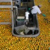Sunkist Weathers Slowdown In Citrus Exports