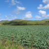 SLO County 2015 Crop Value Down 8 Percent