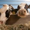 Ag Beat : Milk Price / Fish & Farming
