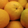VALENCIA ORANGE PRODUCTION FORECAST AT 15.6 MILLION CARTONS