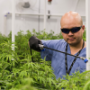 Two Companies Promise To Create Hundreds Of Cannabis Jobs
