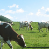 Dairy Biogas Plan / Making Solar Steam