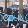 As Temps Climb… Cow Carcasses Pile Up