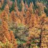 Using Urban Fires To Push USFS Tree Thinning Legislation
