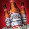 Food News: Bud sales fizzle
