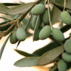 California olive growers win duties on Spanish olives
