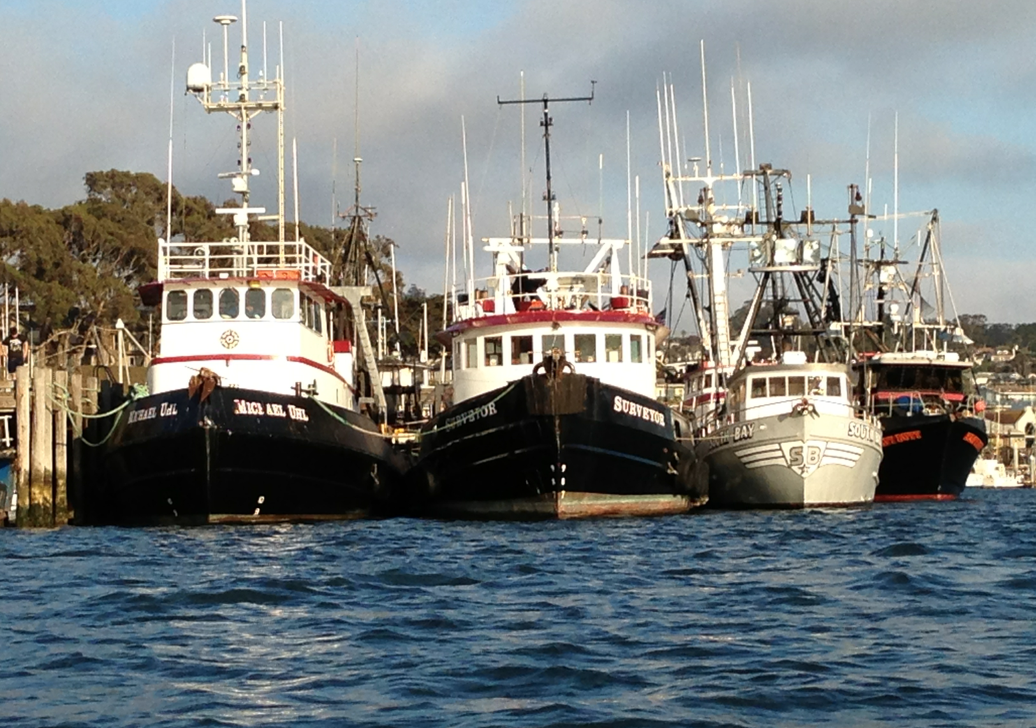 New report says morro bay fishing industry on rebound for Morro bay fishing