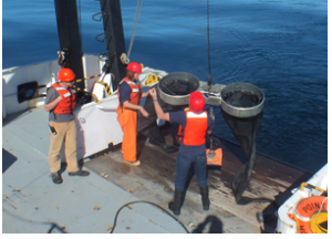 Bongo nets are deployed up to 200 meters deep to catch marine snails (pteropods), which are indicators of the progress of ocean acidification.