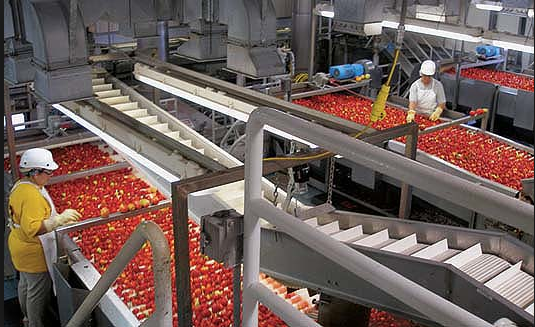 Processing tomatoes are a major job producer in the Valley